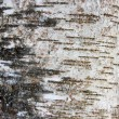 Bark of a tree, an abstract background — Stock Photo