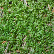 Moss green background — Stock Photo