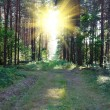 Sunrise in the magic forest — Stock Photo