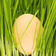 Royalty-Free Stock Photo: Chicken eggs, grass