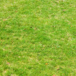 Background, green grass — Stock Photo