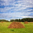Hay in a field, a blue cloudy sky - Stock Photo