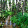Green summer forest, river — Stock Photo #1088928