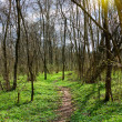 Stock Photo: Trail in Spring Park