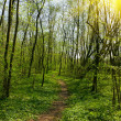 Trail in Spring Park — Stock Photo #1089616