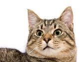 Katze, ein porträt — Stockfoto