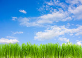 Grass on a background of blue sky, summe — Stock Photo