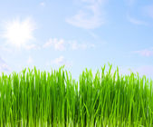 Green grass, blue sky — Stock Photo