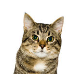 Kočka, portrét — Stock fotografie