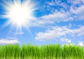 Gras op een achtergrond van blauwe hemel, summe — Stockfoto