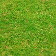 Background, green grass — Stok fotoğraf
