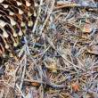 Stock Photo: Anthill, macro
