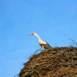 Stork in nest — Stock Photo #1091432