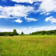 Summer landscape — Stock Photo #1091501