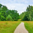 Stock Photo: Trail in summer park, blue sky