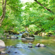 Green summer forest, river — Stock Photo