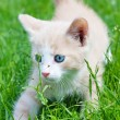 Royalty-Free Stock Photo: Little kitten in the grass