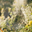 Morning dew on the grass and the Web — Stock Photo