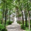 Path to the sea through the forest — Stock Photo #1092205