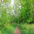 Trail in summer park — Stock Photo #1092228