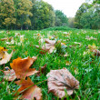 Autumn foliage in the green grass — Stock Photo