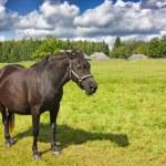 Horse pasture — Stock Photo #1092586