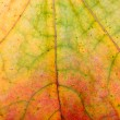 Autumn leaves, close-up — Stock Photo #1092643