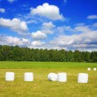 Bales of hay on field — Stock Photo