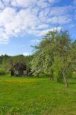 Deserted house, garden, spring — Stock Photo