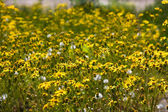 Yellow chamomile — Stock Photo