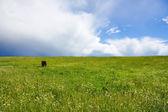 Summer meadow, blue sky, horse — Stock Photo