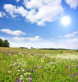 Field of flowers, summer landscape — Stock Photo