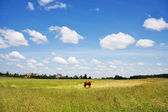 Rural landscape, the horse — Stock Photo