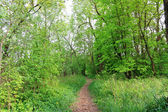 Trail in the summer the park — Stock Photo