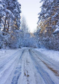 Winter road, a forest — Stock Photo