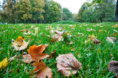 Autumn foliage in the green grass — Стоковое фото