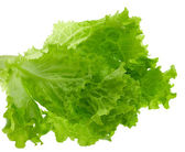 Lettuce leaves, isolated — Stock Photo