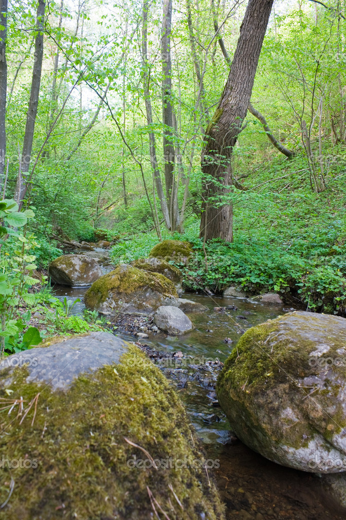 Forest Stream — Stock Photo #1090286