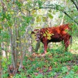 Red cow in the autumn forest — Stock Photo
