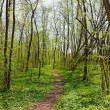 Trail in Spring Park — Stock Photo #1343563
