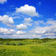 Summer landscape — Stock Photo #1343608