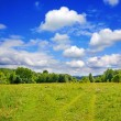Summer landscape — Stock Photo #1343636