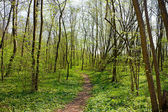 Trail in Spring Park — Stock Photo