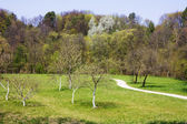 Parque primavera — Foto Stock