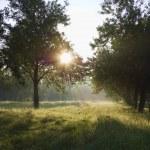 Dawn in the apple garden of Eden — Stock Photo #1391879