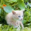 Little kitten in the grass - Stock Photo