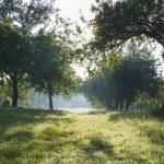 Dawn in the apple garden of Eden — Stock Photo