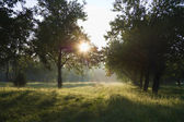 Dawn in the apple garden of Eden — Stock Photo