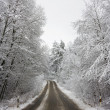 Winter road through the woods - Stock Photo