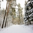 Road in the winter forest - Stock Photo